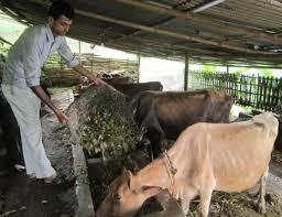विदेशबाट फर्किएर कृषि र पशुपालनमा