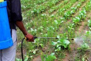 तरकारीमा विषादी : किसानलाई सचेत गराइँदै